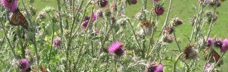 July_8_2012_butterfly10